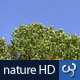 Nature HD | Green Tree Canopies - VideoHive Item for Sale