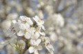 Blossom - PhotoDune Item for Sale