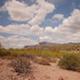 Arizona Desert Shrubs