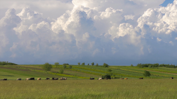 VideoHive Green Field With Cows and Beautiful Sky 1 17001826