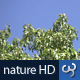 Nature HD | Green Tree Canopies II - VideoHive Item for Sale