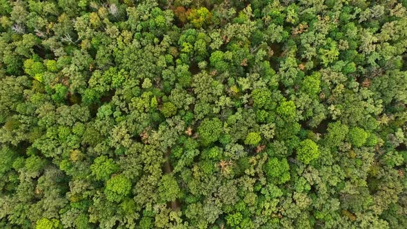 Download Green Trees In Forest nulled download