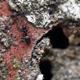 Ants on Stone 2