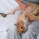 Ginger Cat Lies on Woman Legs