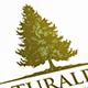 Pine Tree Logo Template