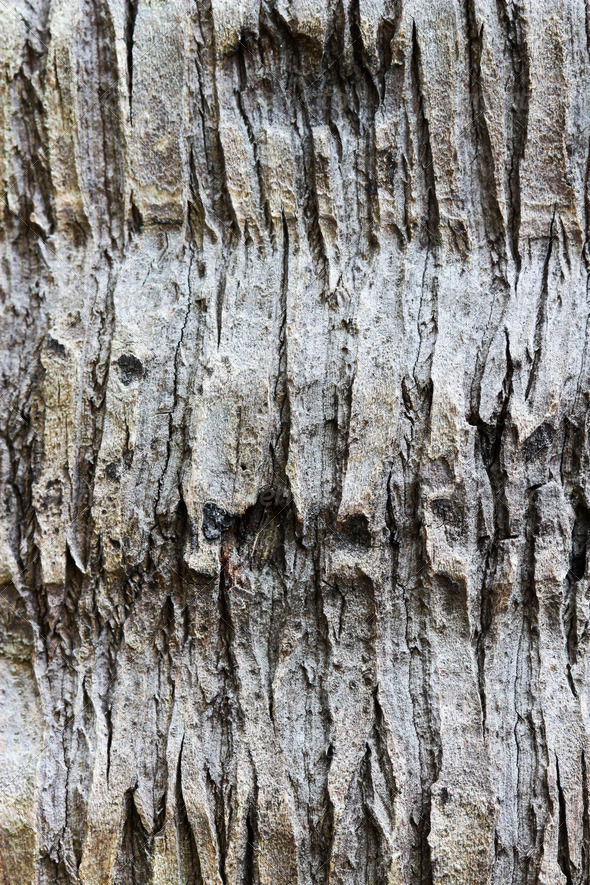 Fragment the bark of the old tree - Stock Photo - Images