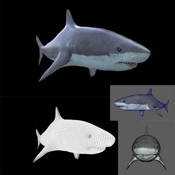 3DOcean SHARK 3D Model Element Maya Obj arnold 17506897