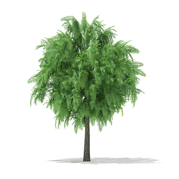 White Willow (Salix alba) 4m - 3DOcean Item for Sale