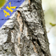 Ants in Wood
