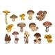 Mushrooms Icons Set