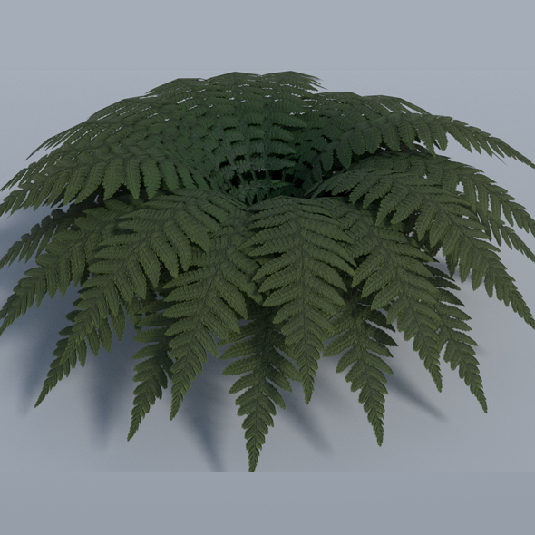 3DOcean Fern Low Poly 17587067