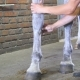 Male Hands Makes Massage To Legs Of Horse. Care For Animals. Treatment For Horse Leg In a Stall