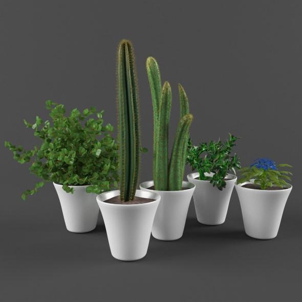 Plants set - 3DOcean Item for Sale