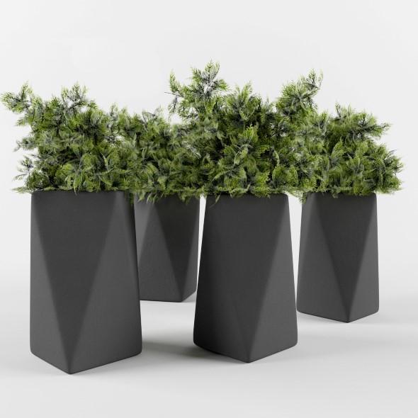 Plant juniper in a pot  - 3DOcean Item for Sale