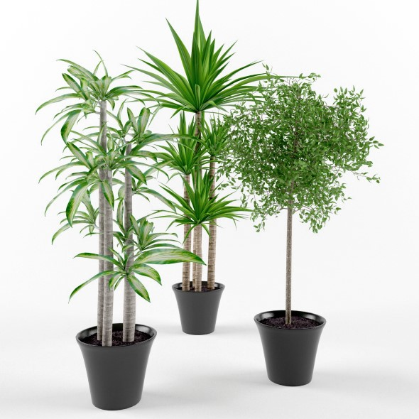Plants palms and ficus - 3DOcean Item for Sale