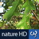 Nature HD | Green Leaves on Tree - VideoHive Item for Sale