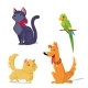 Cats, Dog And Parrot Vector Illustration.