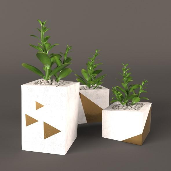 Plant Money Tree - 3DOcean Item for Sale