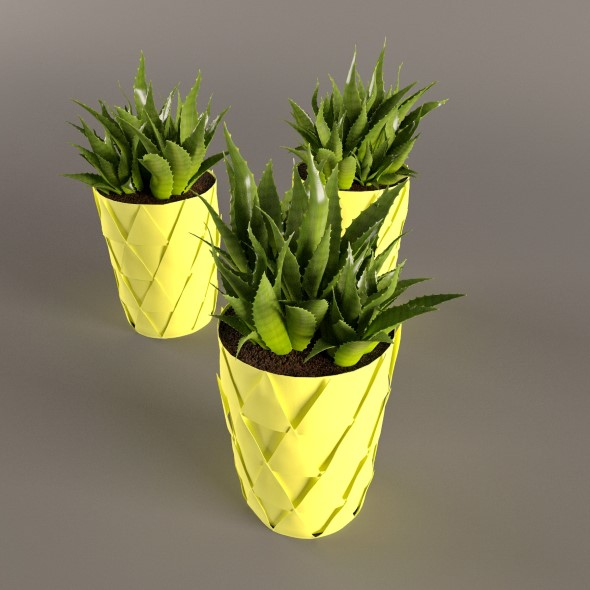 Plant Cactus in yellow pot - 3DOcean Item for Sale