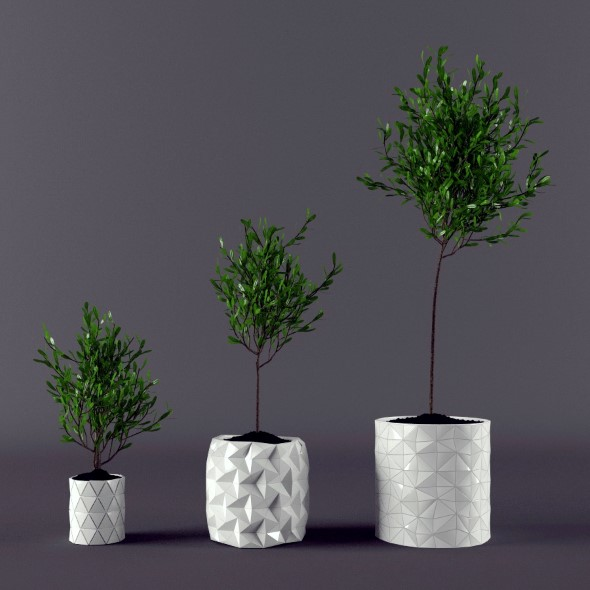 Plant ficus potted  - 3DOcean Item for Sale