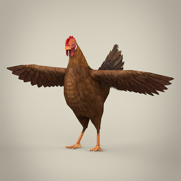 Game Ready Realistic Hen - 3DOcean Item for Sale