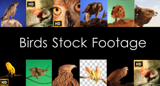 birds stock footage