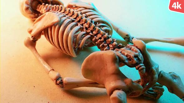 Download Human Skeleton 249 nulled download