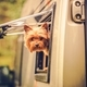 Download RV Travel with Dog from PhotoDune