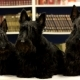 Three Dogs In The Library