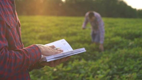 Download Two Farmers Obschayutsya Near Soybean Fields nulled download