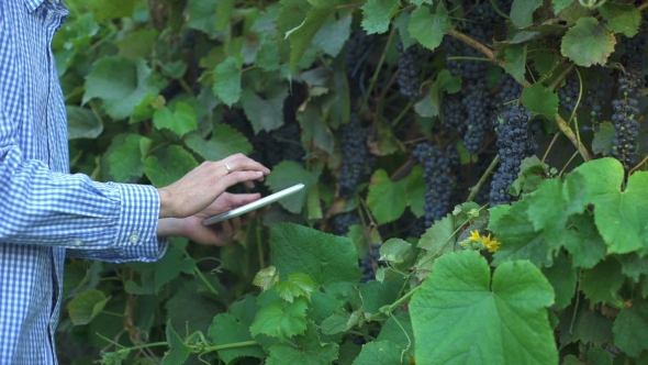 Download Tablet In The Hands Of The Farmer On The Background Of The Vineyard nulled download