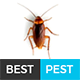 Best Pest | Professional Local Pest Control Multipurpose PSD Template
