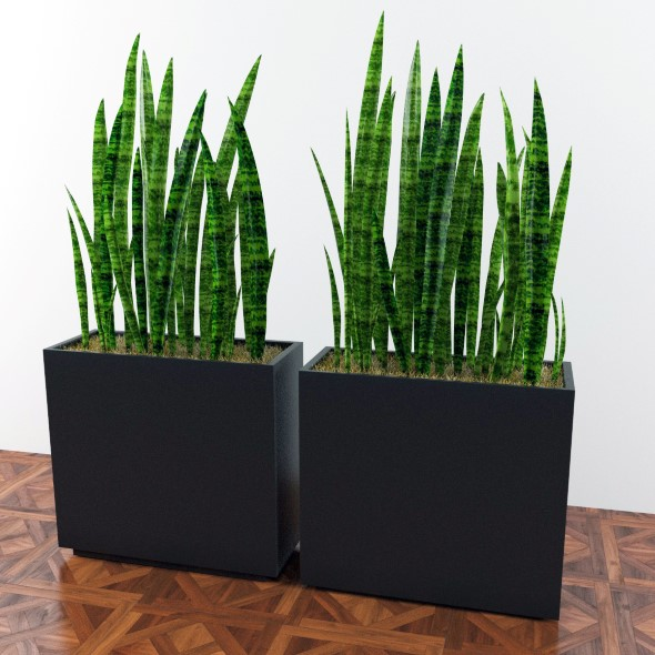 Plants sansevieria in a pot  - 3DOcean Item for Sale