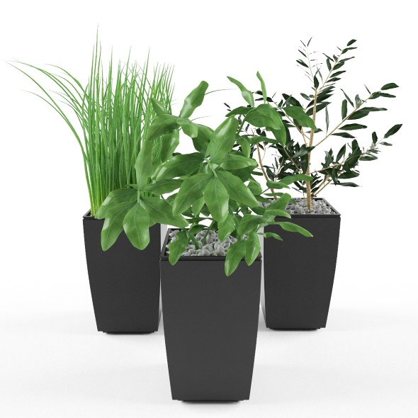 Plants onion, spinach and bay leaf in pot - 3DOcean Item for Sale