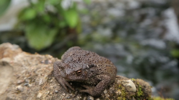 Download Toad Basking On The Rock nulled download