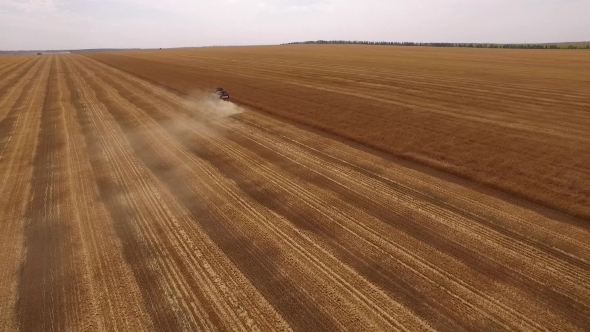 Download Drone Flying From Smoking Harvester On Golden Field Of Ripe Wheat, Showing Beautiful Landscape nulled download