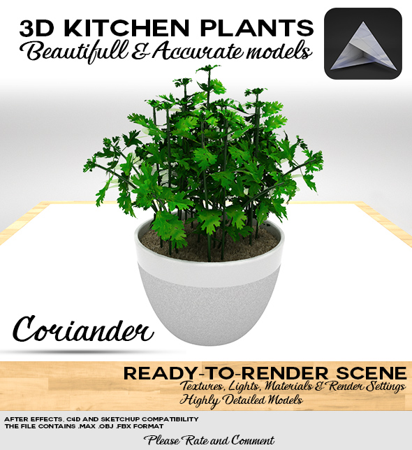 Coriander 3D Pot - 3DOcean Item for Sale