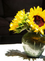 Sunflower Arrangement - PhotoDune Item for Sale
