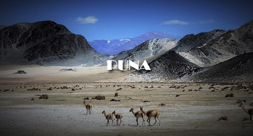 PUNA AND DESERT FOOTAGE