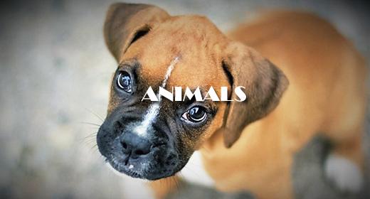 ANIMAL BEHAVIOR FOOTAGE COLLECTION