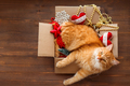 Ginger cat lies in box with Christmas and New Year decorations o