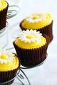 Cupcakes - PhotoDune Item for Sale