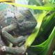 Chameleodesign