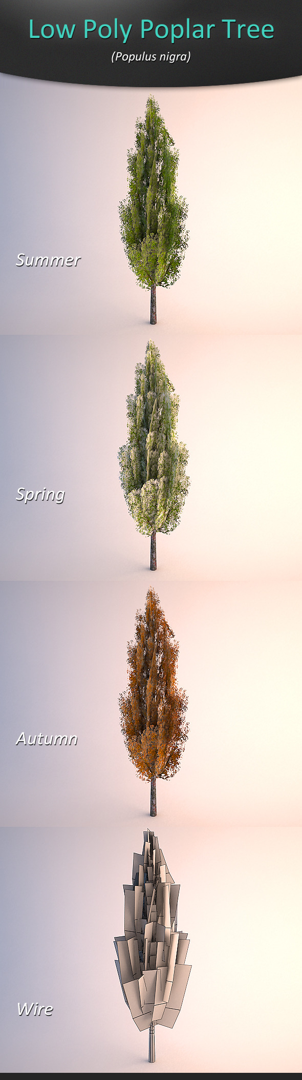 Low Poly Poplar Tree - 3DOcean Item for Sale