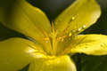 Droplets on Flower Petals - PhotoDune Item for Sale