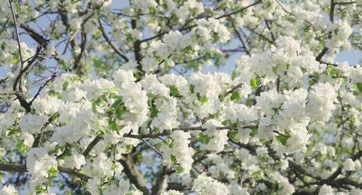 Wildflowers and Blooming Tree