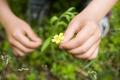 Hands Picking Wildflowers