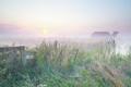 Dutch foggy farmland at sunrise