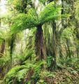 Fern tree - PhotoDune Item for Sale