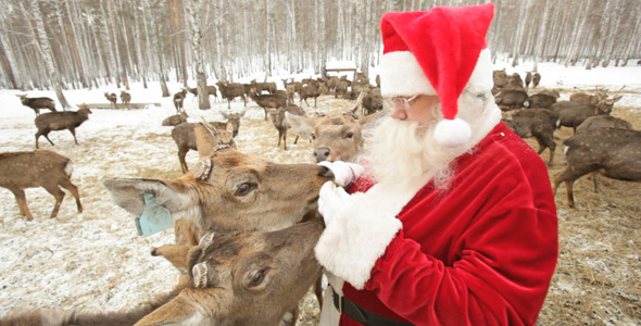 Deer All Around Santa